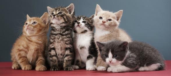 5 cute-cats-kittens-that-look-alike