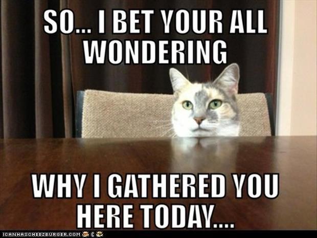 the-cat-meetings-1.jpeg
