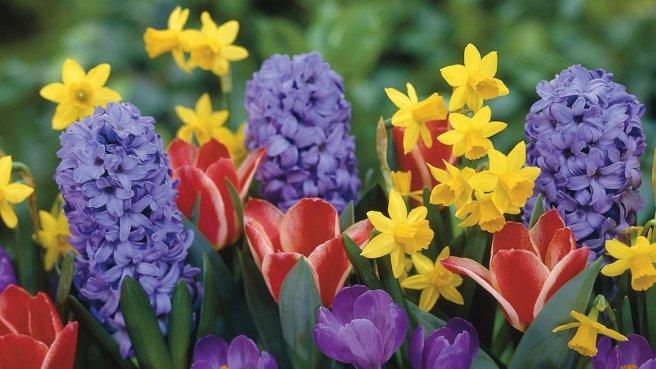 hyacinth-daffodil-tulip-crocus_1024x1024